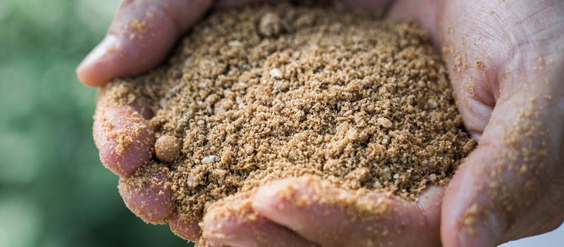 養鶏のための発酵飼料